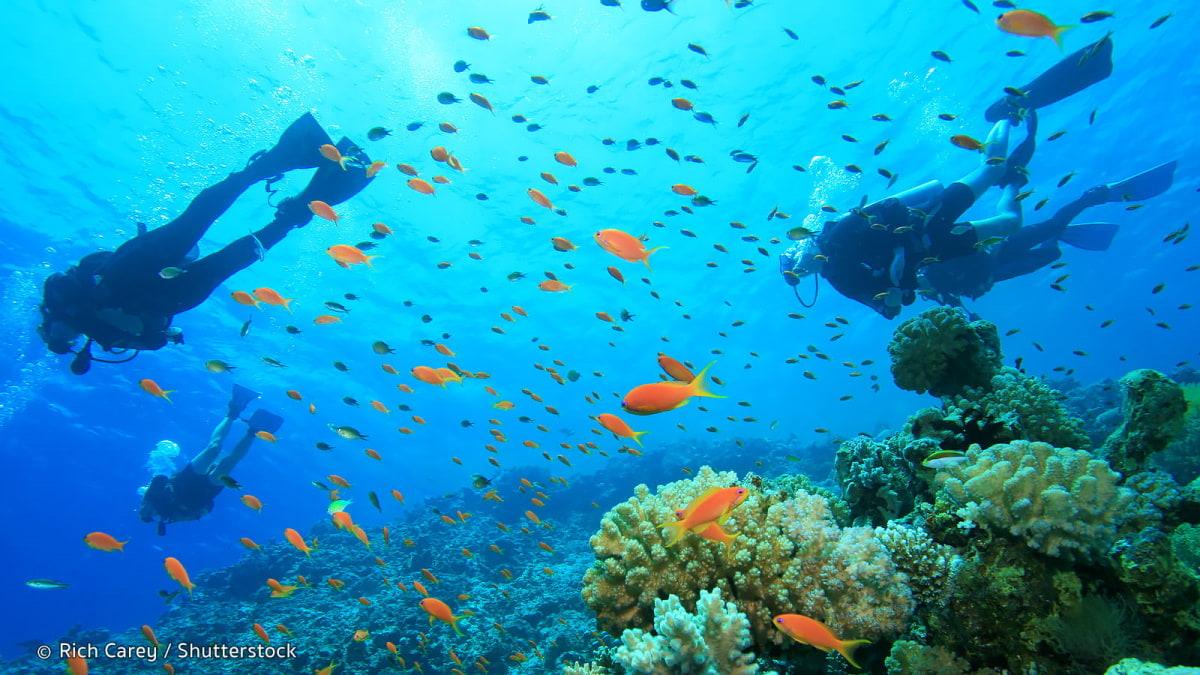 Snorkeling at Pulau Payar
